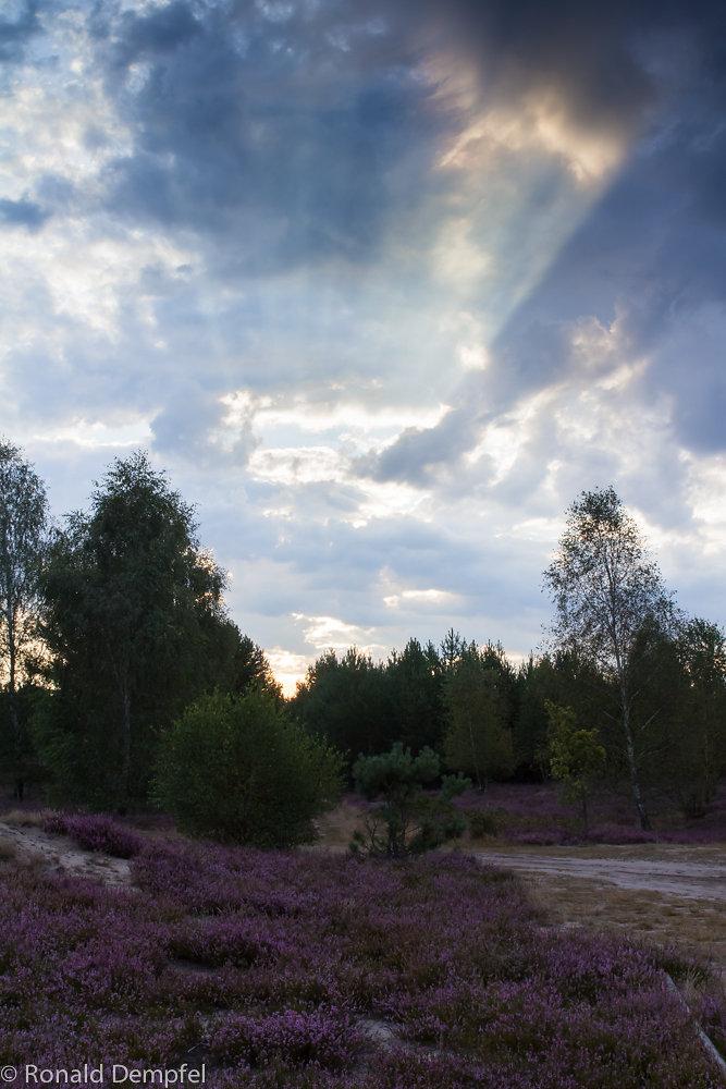 Sonnenaufgang-Reicherskreuzer-Heide.jpg
