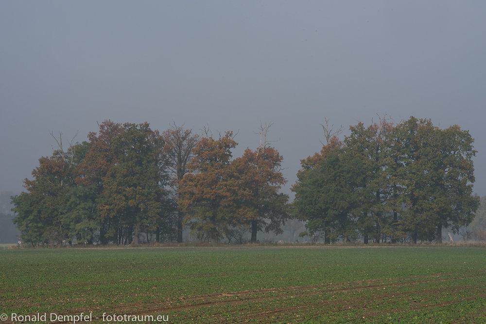 Herbst2.jpg