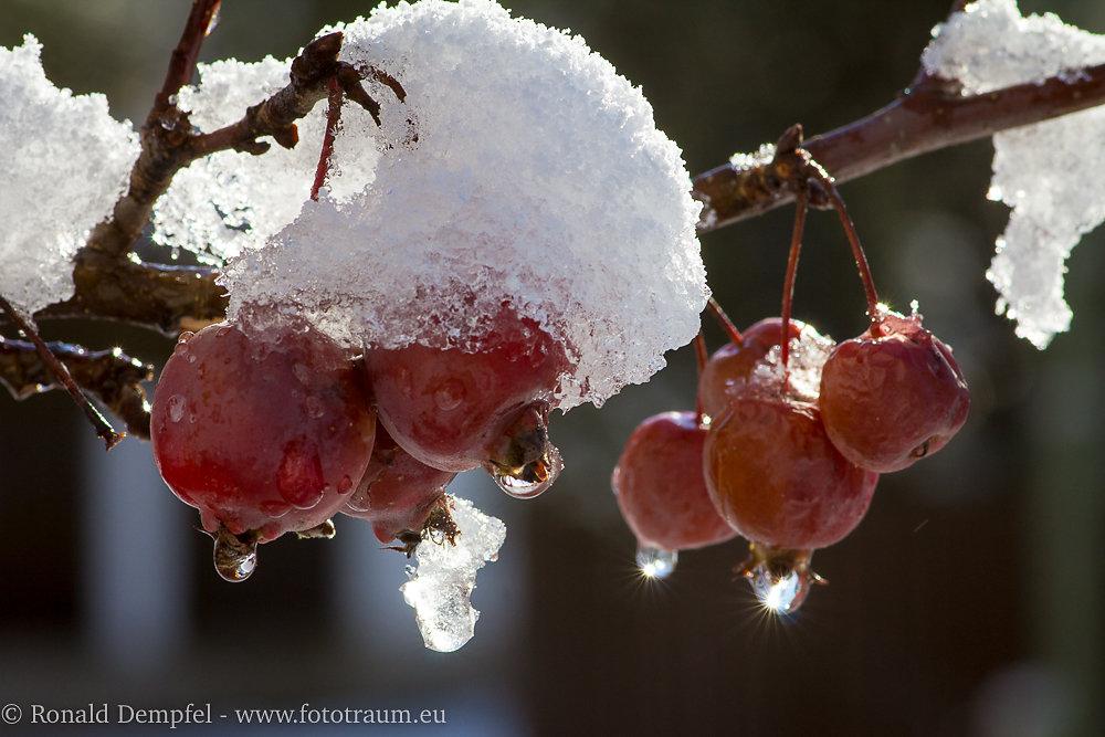 Winterapfel.jpg